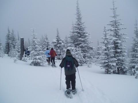 guided snowshoeing tour, british columbia